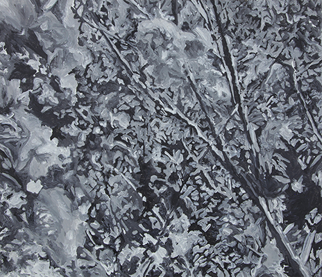 a foreground of a monochromic forest